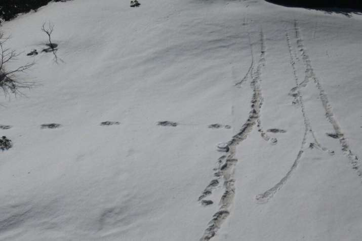 India Tv - Makalu-Barun National Park has been the traditional site wherein such footprints have been sighted in past however footprints in such large numbers have been sighted for the first time by an Indian Army Expedition team.