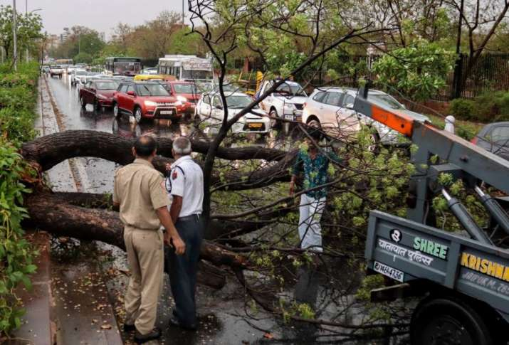 Fallen tree obstructing traffic in Jaipur after a