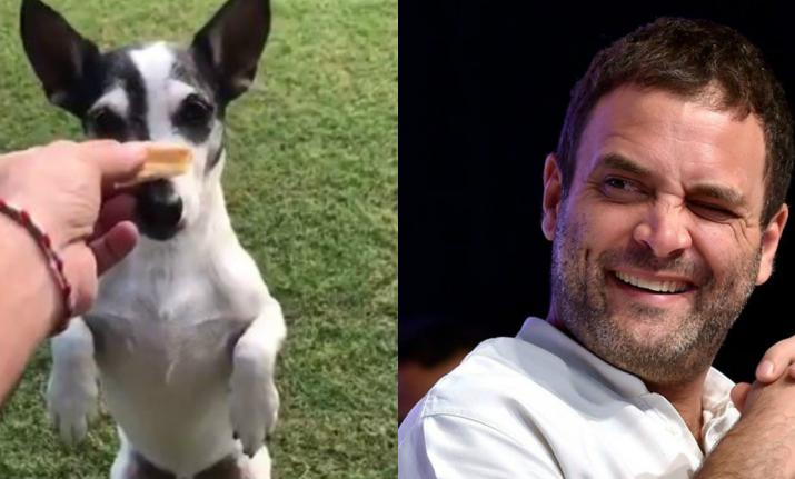 Rahul's 'Pidi' love out in open, check out when both went