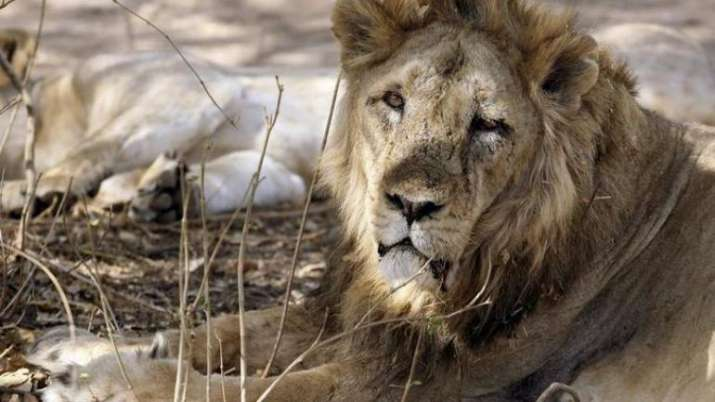 Gir forest and other protected areas spread across