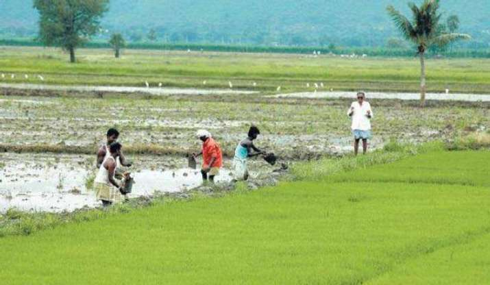 Bengal rolls out free crop insurance scheme for farmers