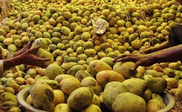 The Alphonso from the western part of the country has not