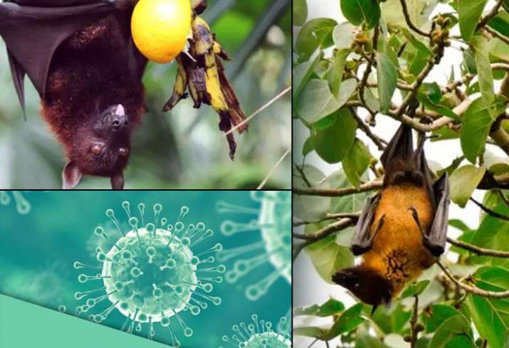 The nomenclature of Nipah virus, or NiV, originated from