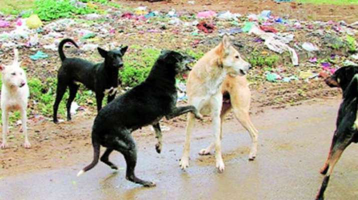 Stray dogs maul infant to death in UP | India News – India TV