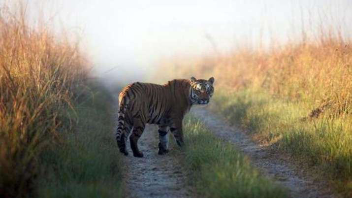Notices to 15 websites fraudulently using Corbett tiger