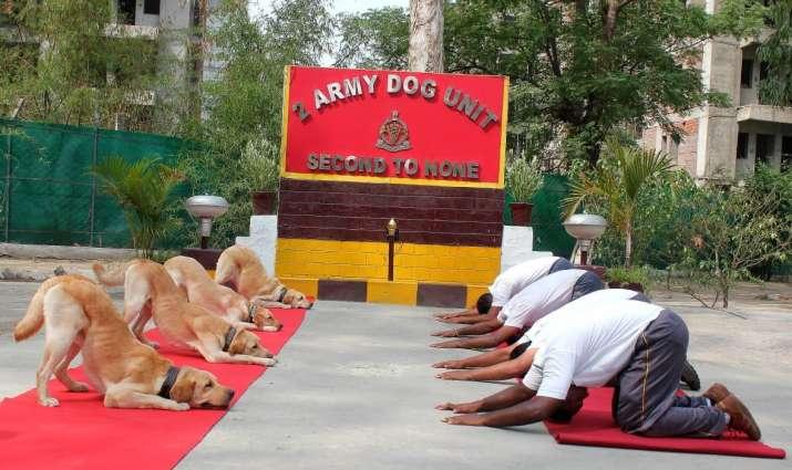 India Tv - International Yoga Day