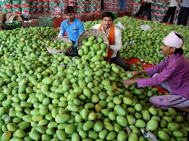 Mango production likely to drop slightly to 20.95 million
