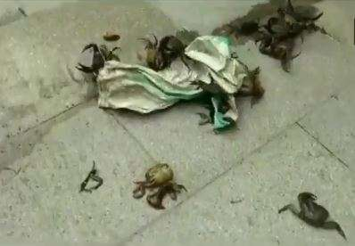 NCP workers throw crabs outside residence of Maharashtra