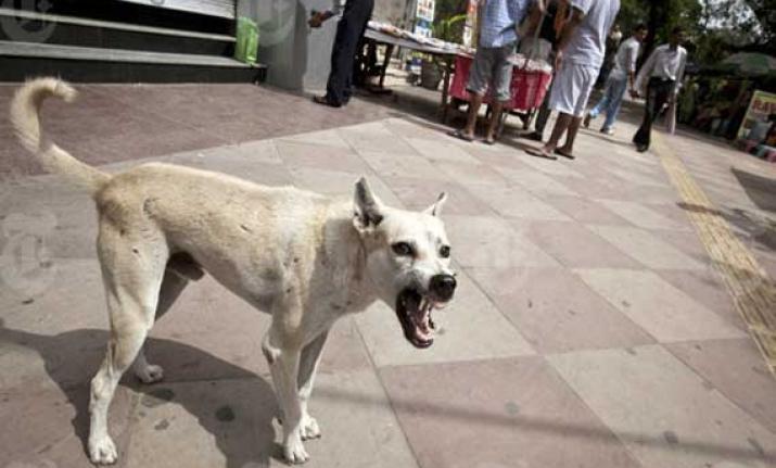 Wild dog menace in UP village, PAC deployed