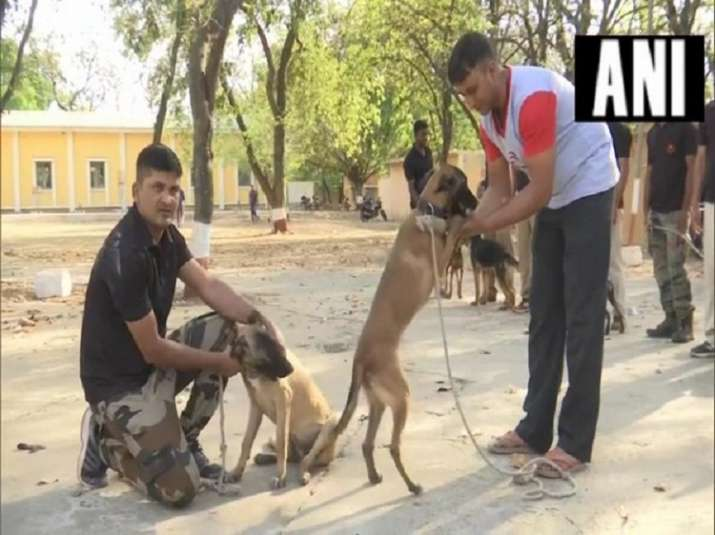 MP government transfers police dog and handlers, BJP takes