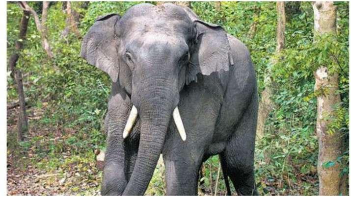 Elephant Whisperer: Uttar Pradesh forest officials have