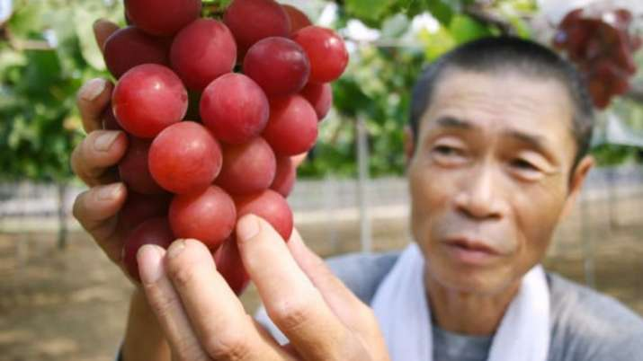 India Tv - Bunch of red Japanese grapes sold for ,000 at auction