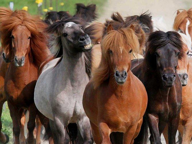 4 horses test positive glanders Chhattisgarh