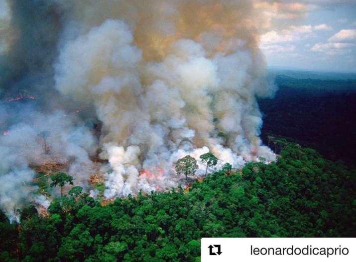 India Tv - Amazon Rainforest Fire