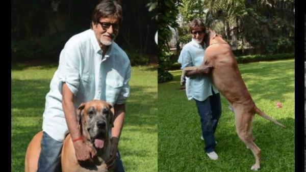 India Tv - Amitabh Bachchan playing with his dog at Jalsa.