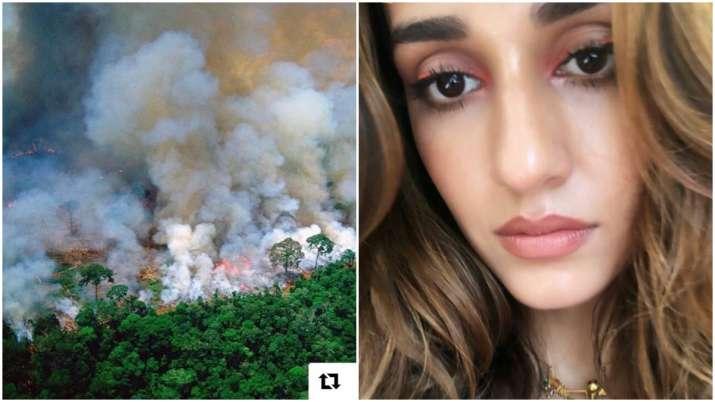 Amazon Rainforest Fire: Disha Patani, Anushka Sharma and other Bollywood celebs share concern on soc