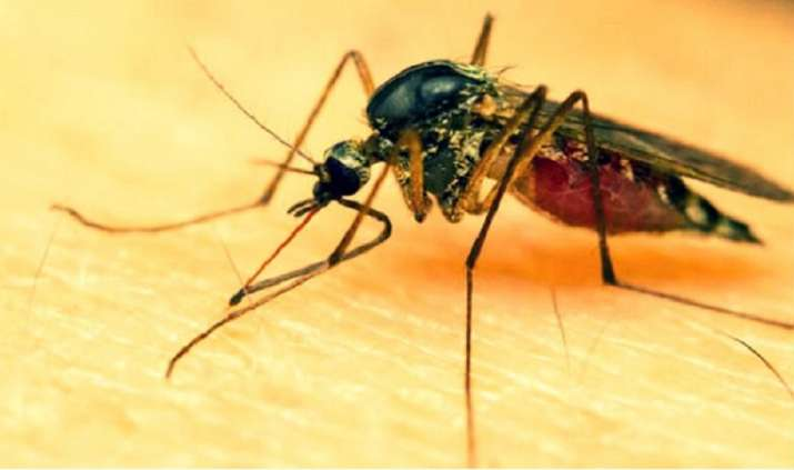 Cases of vector-borne diseases reported in NDMC area see