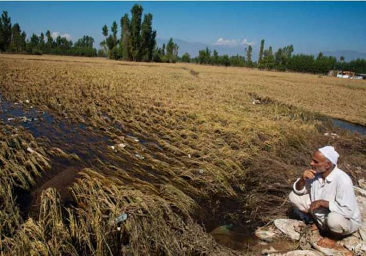 Microsatellite data helped double yield for Indian farmers