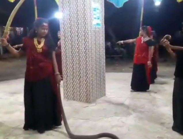 Young girls perform garba with cobras, case registered