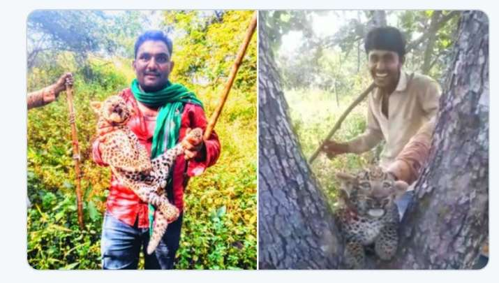 4 villagers torture a leopard cub in Gir forest, case registered