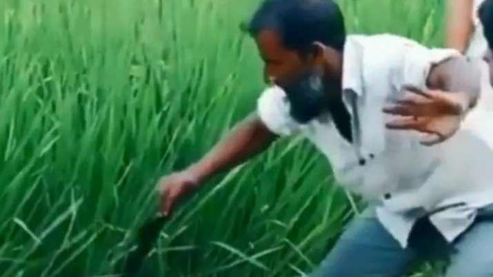 viral video, snake