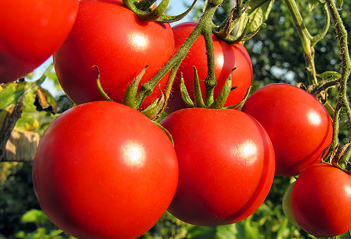 India Tv - A dietary compound calledLactoLycopenefound in tomatoes has been shown to improve sperm quality.