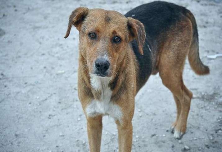 Six pet dogs killed by electrocution in Kolkata