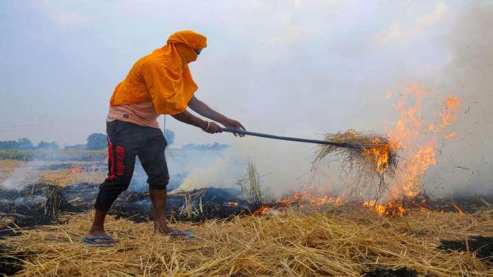 Stop stubble burning immediately: Delhi environment