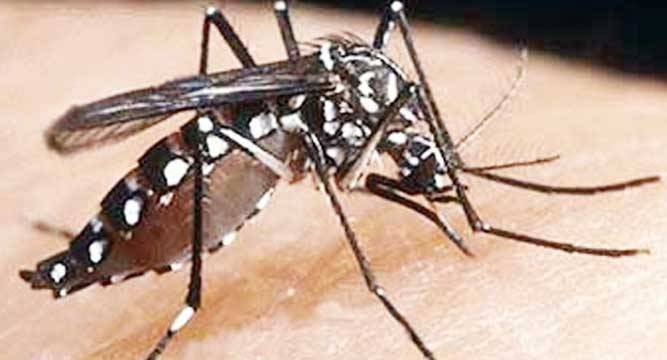 Malaria-endemic districts reduced to 63 in 2018