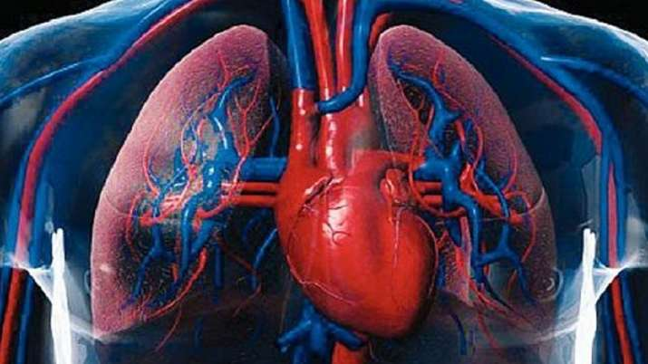 Human heart cells behave differently in space: Study
