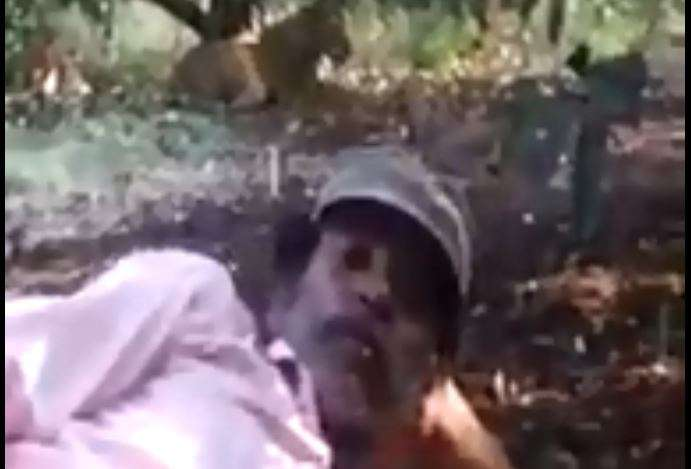 Man risks life to take selfie with lion in Gujarat