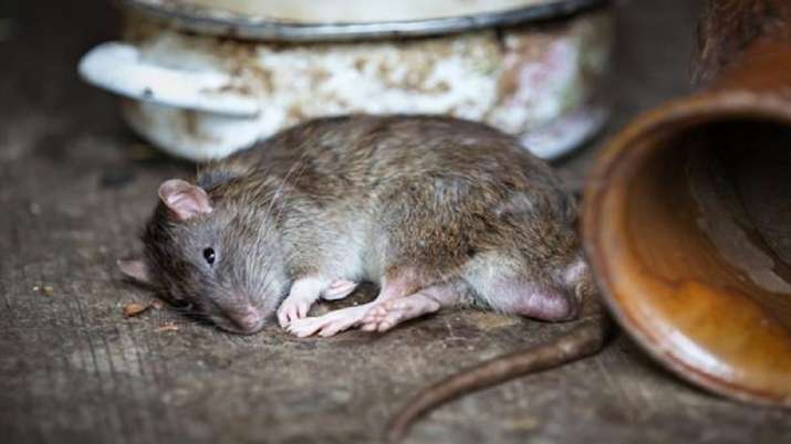 New marker helps predict mice prone to alcohol addiction: Study