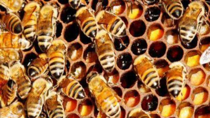 Bee attack leaves 60 students injured in Tripura