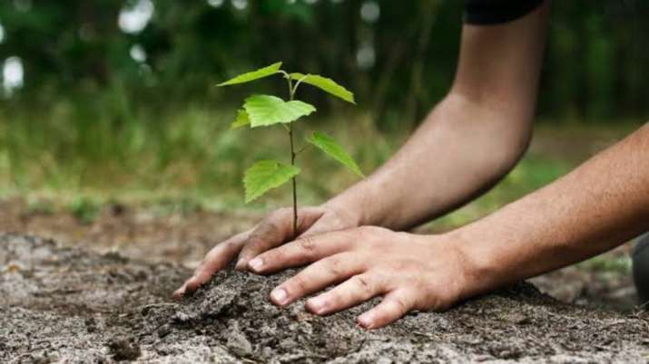 Ditch air purifiers, technology; plant trees to reduce air