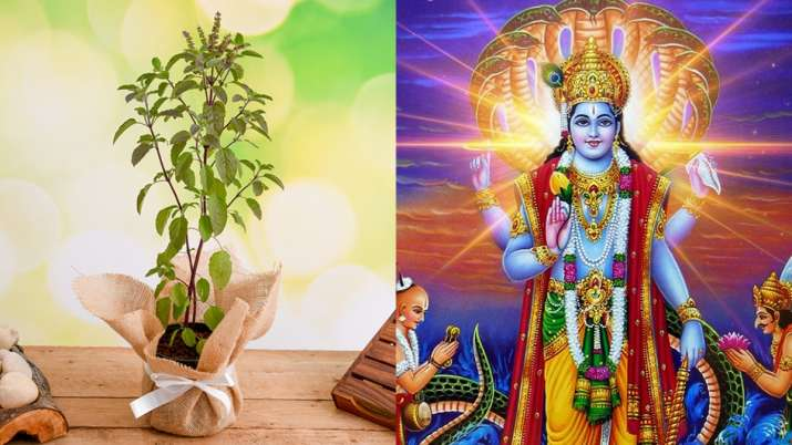 Tulsi Vivah 2019: Know date, timings, katha & puja vidhi