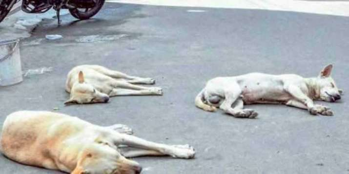 dogs, tortured, dead dogs, agra