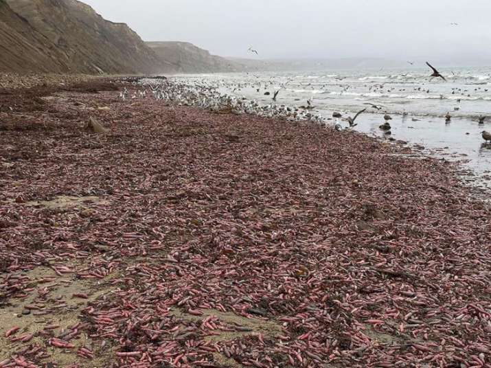 California beach penis fish Latest News, What is the most popular beach in california