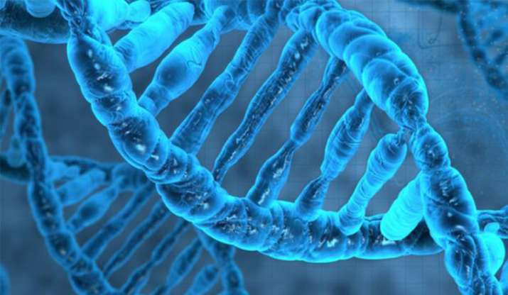 Asia has at least ten ancestral lineages: Study