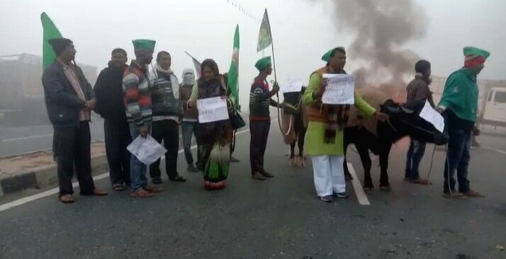 RJD workers use buffaloes, ride carts at anti-CAA protest