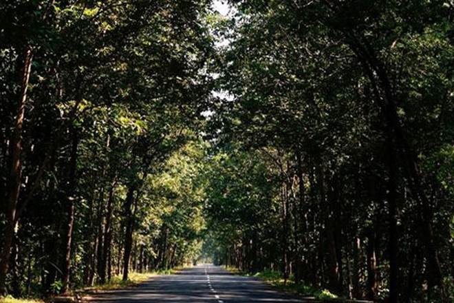 Man saves over 1000 trees with the help of 'God' in Uttar Pradesh (Representational image)