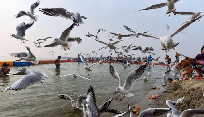 India Tv - Prayagraj: Migratory birds fly as devotees take a dip on the River Ganges on New Year 2020, in Praya