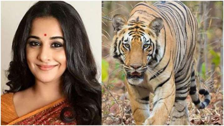 Vidya Balan to play forest officer in film based on Maharashtra's tigress Avni?