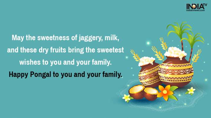 Pongal wishes, pongal greetings