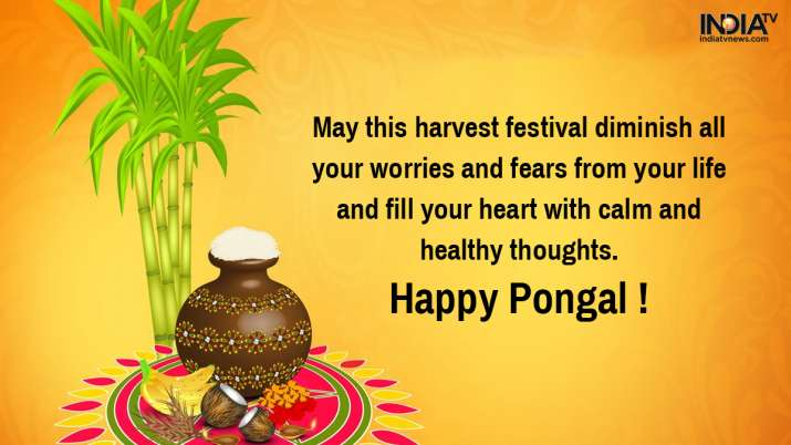 India Tv - Pongal 2020 wishes