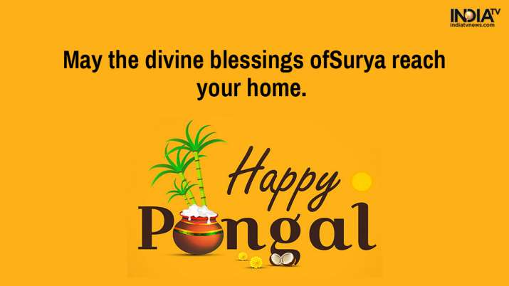 India Tv - Pongal wishes, pongal greetings