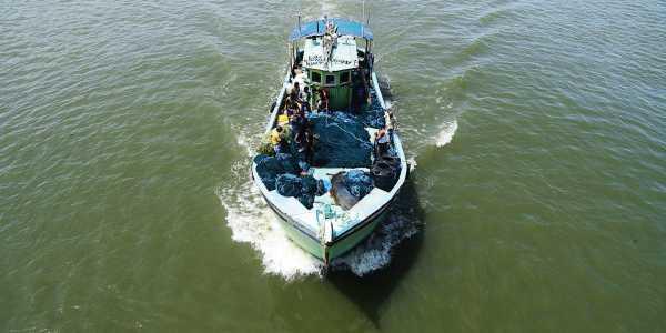 Marine scientists demand trawler ban within 12 nautical