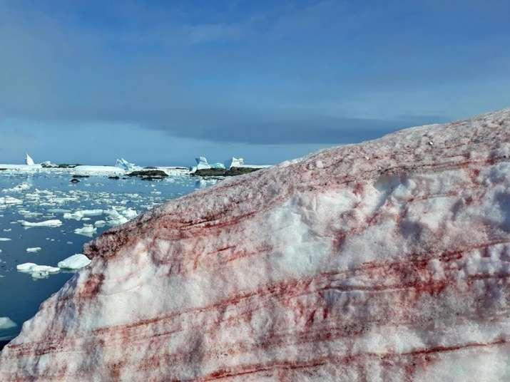 India Tv - Blood-red snow in Antarctica