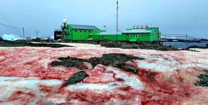 Blood-red snow in Antarctica