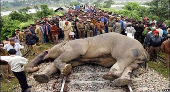 Elephant killed by speeding train in Jharkhand