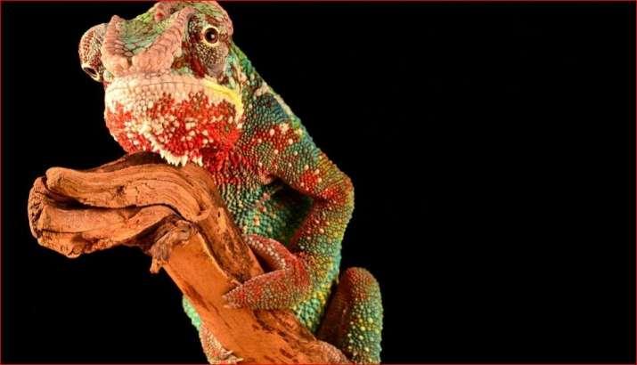 Tiny prehistoric lizard sheds light on reptile evolution: Study